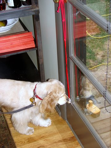 Ginger, Salt Lake City, dog training client