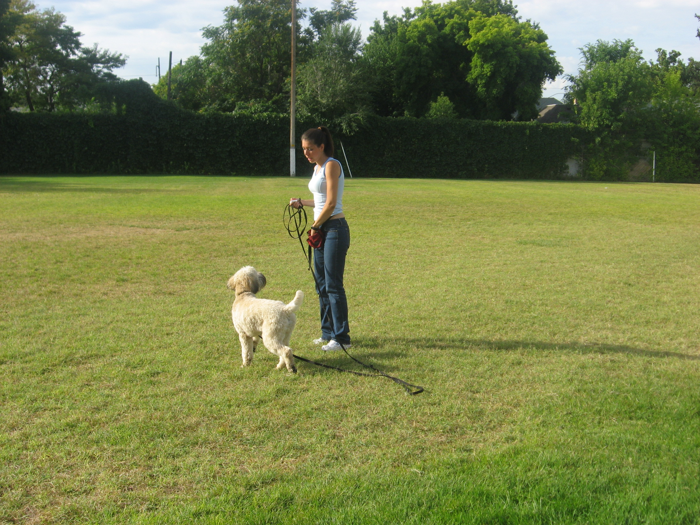 Are You Sick of Your Dog Running Away and Not Coming When Called? Dog Training – Salt Lake City