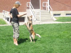 Red Heeler - Dog Training - Salt Lake City