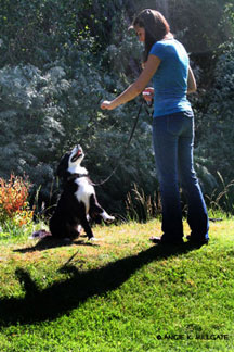 Are You Struggling with Getting Your Dog to Listen? Here Are Some Salt Lake City Dog Training Secrets.