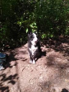 Seiki hiking and dog training, Salt Lake City