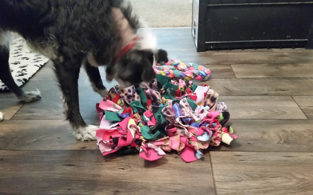 Enrichment and Games to Keep Your Dog Entertained!