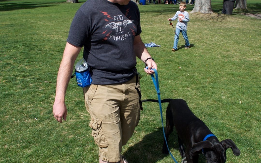 Are You Frustrated that Your Dog Sniffs too Much on Walks? – Salt Lake City Dog Training