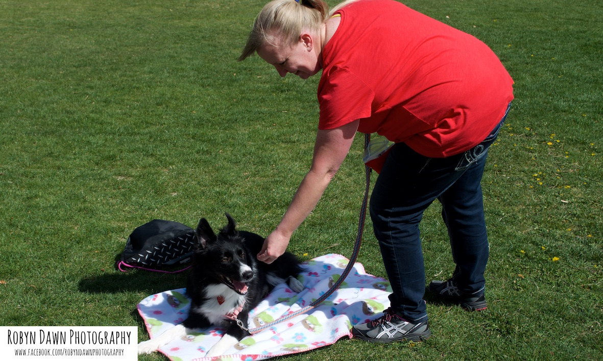 Intermediate Dog Training, Salt Lake City
