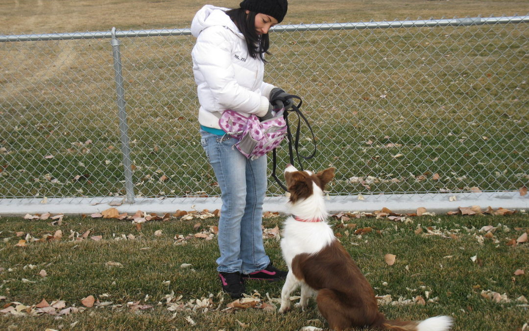 The Biggest Mistakes People Make When Training Their Dogs – Dog Training – Salt Lake City