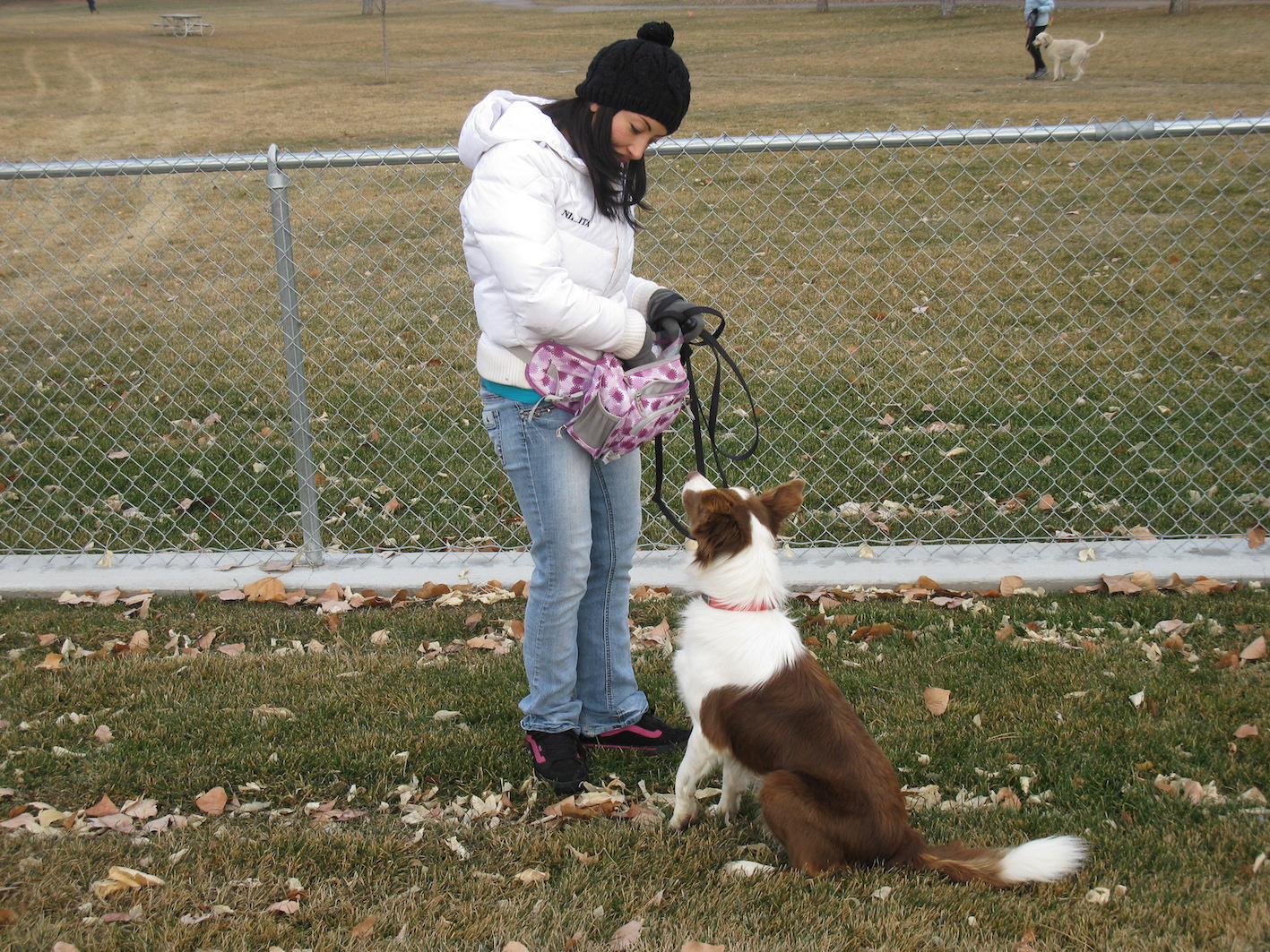Border Collie - Dog Training - Salt Lake City
