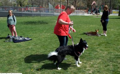 How to Train Place - Dog Training - Salt Lake City - Heeler - Border Collie - Shiba Inu