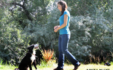 Johanna Teresi - How to Train Stay - Dog Training - Salt Lake City