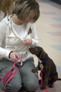 Puppy-Training-Classes-Salt-Lake-City-Labrador-Retriever