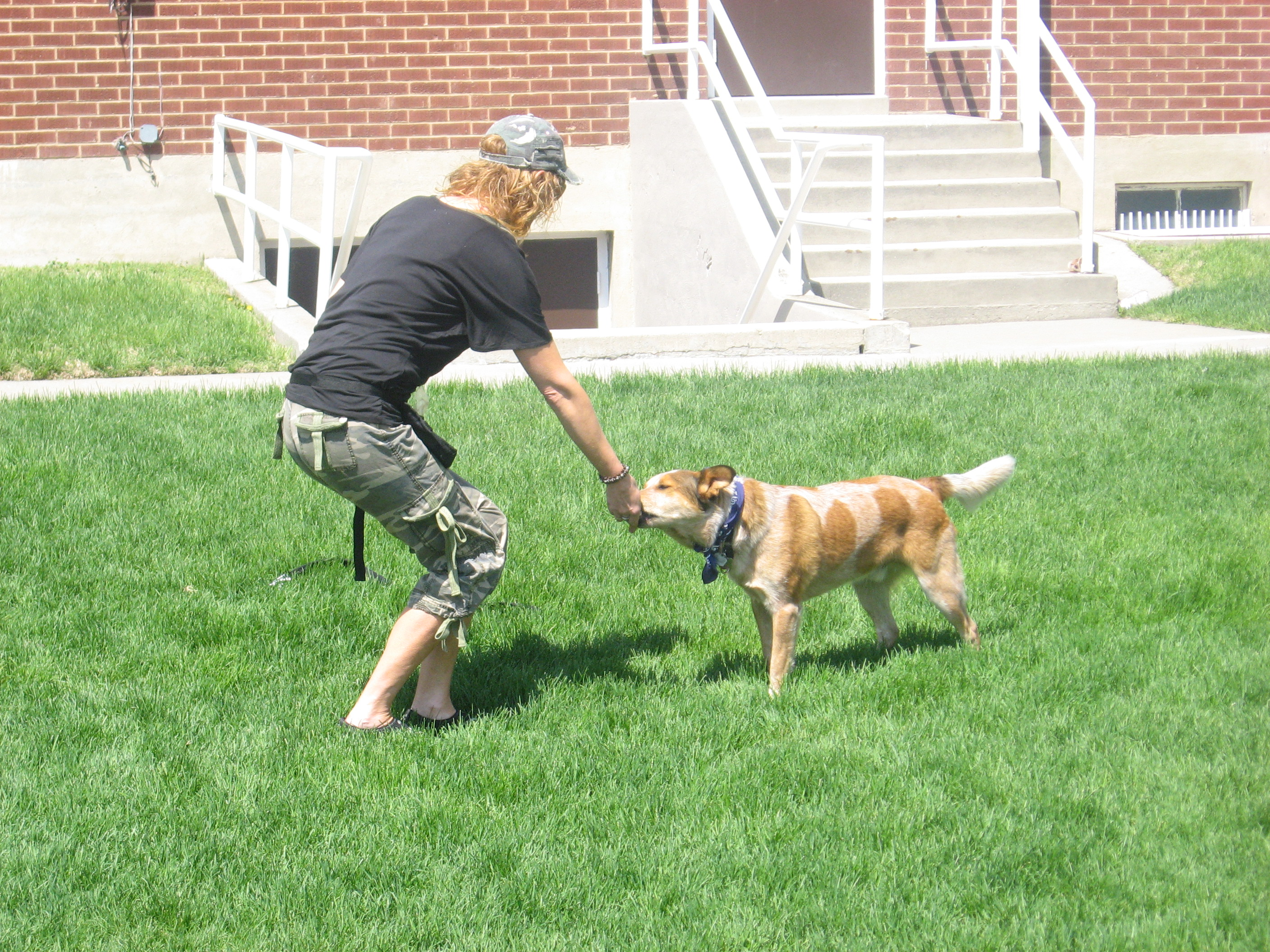 Red Heeler - Dog Trainers - Salt Lake City