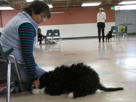 Obedience to get your dog to listen - Dog Training - Salt Lake City