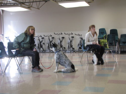Get Your Dog to Listen - Obedience Training - Salt Lake City