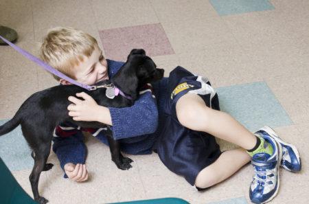 Labrador - Puppy Training - Salt Lake City