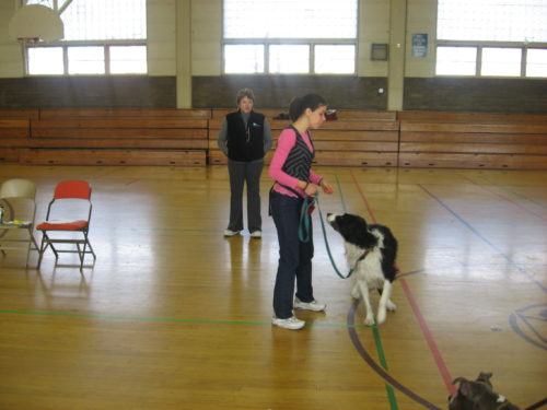 How to train loose leash walking - Salt Lake City - Dog Trainers