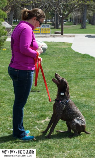 Pointer - Calm Dog -Salt Lake City Dog Trainers