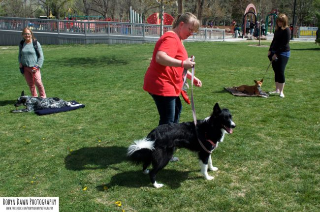 Group Training - Dog Trainers - Salt-Lake City