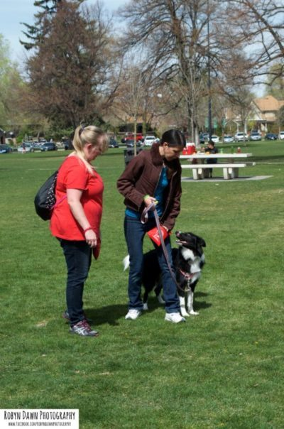 Leash walking border collie - SLC Positive Dog Training