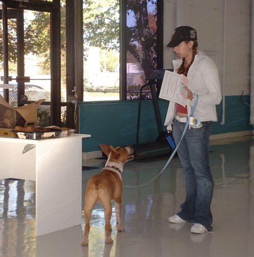 Red Heeler -Dog Obedience - SLC