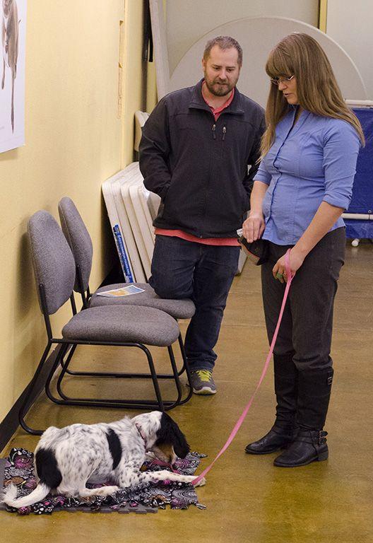 Dog Training Ogden Ut - Dog Training in Ogden Utah